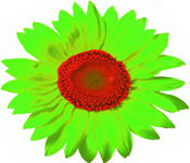Blommor i Smedjebacken