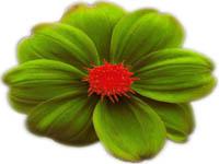 Blomma hos Hillingstads Blomsterodling i Ödeshög